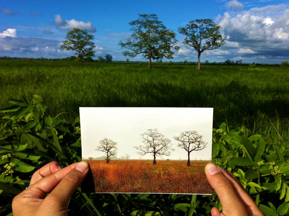 01_Kaziranga_Landscape
