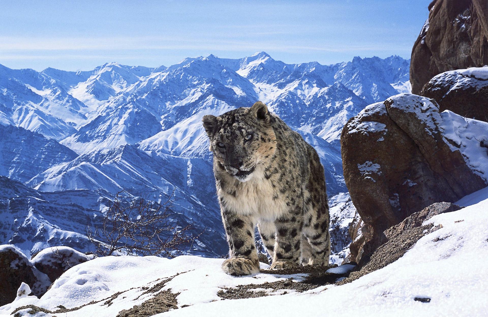 peii_mountains_03-credit_copyright-david-willis-2016-1