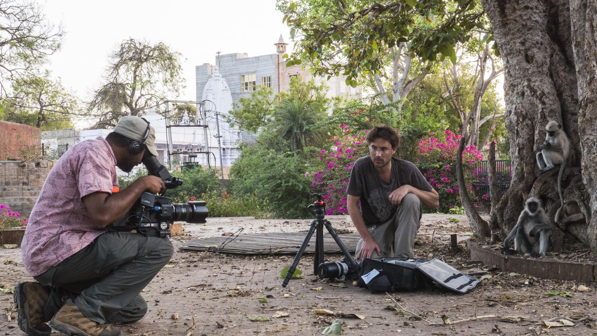 sk_filming_fd_bbc_pe2_langurs_2380559